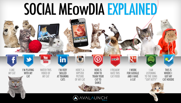 social-media-explained-by-cute-cats_5127ca6880db9