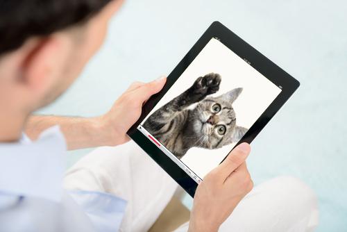 Digital Video Player, Youtube, Cat
